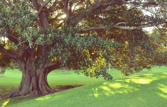 fig tree- underperforming employee